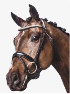 "Aachenträns Anatomiskt ""Horse Guard"""