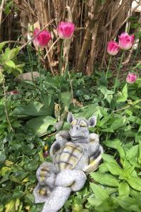 Trädgårdsdrake, Vilar på rygg