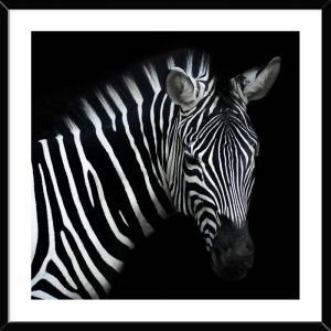 Glastavla, Zebra