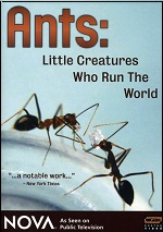 Ants: Little Creatures Who Run The World