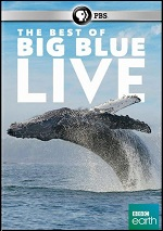 Best Of Big Blue Live