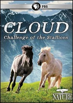 Cloud: Challenge Of The Stallions
