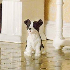 Hund Benji bordercollie valp