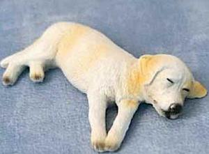 Hund Ben sovande labrador