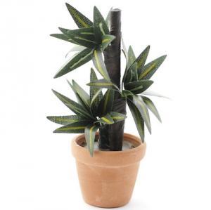 Krukväxt yucca palm i kruka