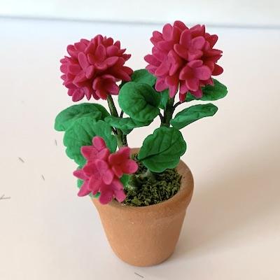 Blomma hortensia i kruka