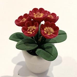 Blomma krukväxt vinröd