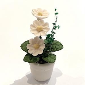 Blomma krukväxt vit