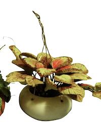 Blomma hängväxt i kruka