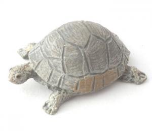 Sköldpadda grå grön
