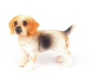 Hund Beagle stående