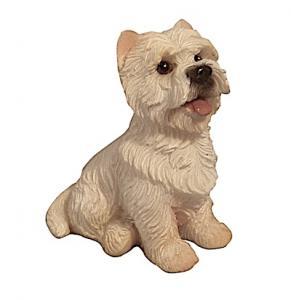 Hund Westie sitting