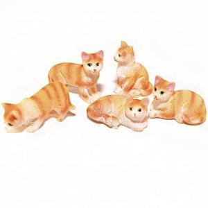 5 st kattungar ginger