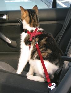 Bilsele för katt med fäste