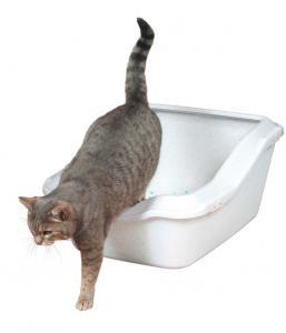 Kattlåda CleanyCat med kant