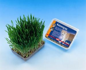 Kattgräs i låda 100 g, Nobby