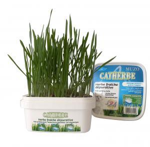 Kattgräs i sålåda 220 g, Muzo