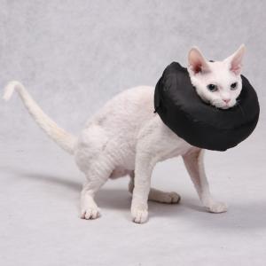 Post-op Collar