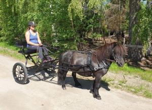 Rockard DO Träning A-B ponny