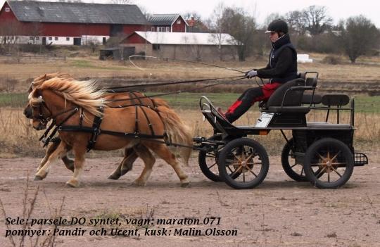 körning med häst utrustning