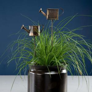 blompinnar med dekorativ vattenkanna stående i kruka med växter