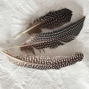 Vacker fjäder från pärlhöns 11-14 cm lång