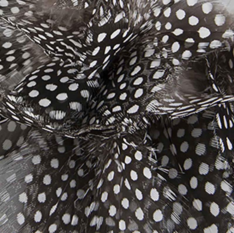 Fjäder - fjädrar från pärlhöns för påskris