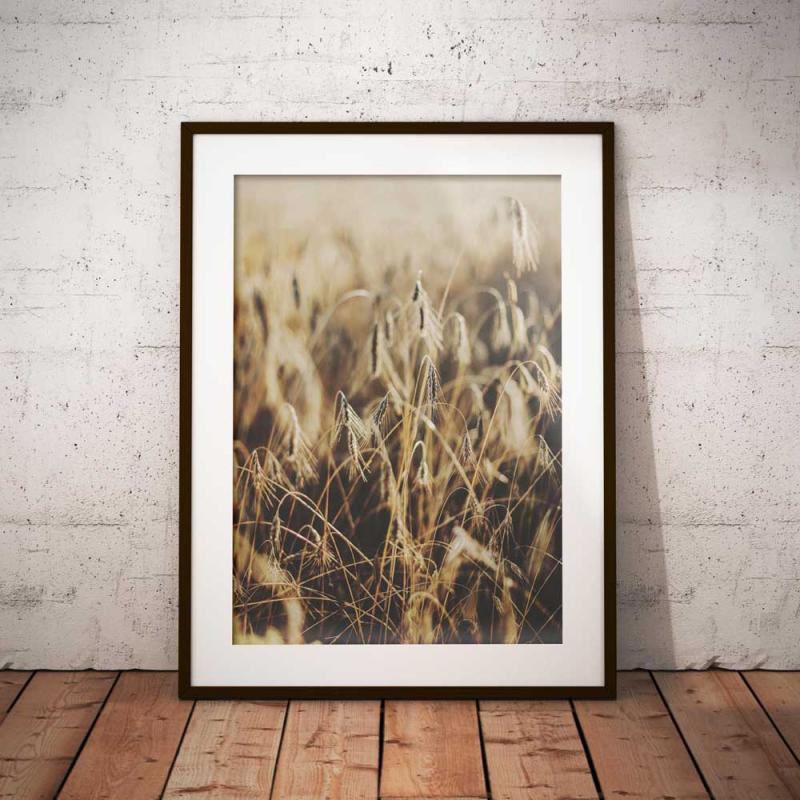 Poster - Råg, foto i jordiga och varma färger