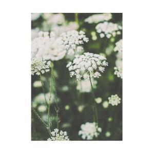 Poster - Vildmorot, somrigt blommotiv i grönt