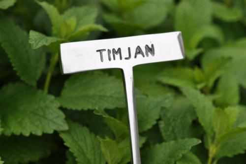 Växtskylt TIMJAN
