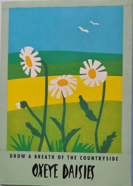 Seed Packet Postcard - Oxeye Daisies