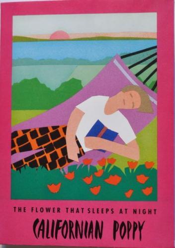 Seed Packet Postcard - Californian Poppy