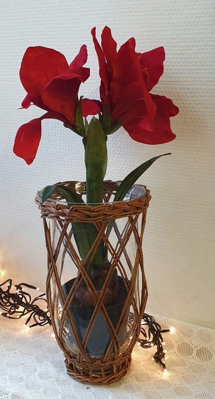 Amaryllis - Röd - 45 cm