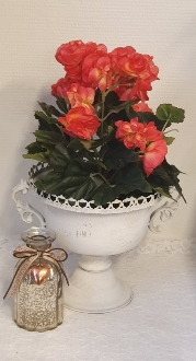 Begonia Ceriserosa - Konstväxt - 28 cm