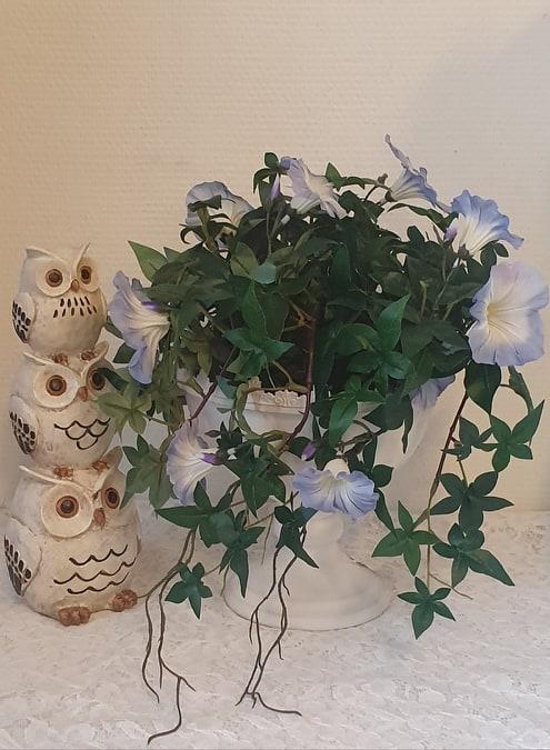 Blomma För Dagen -  Ljusblå