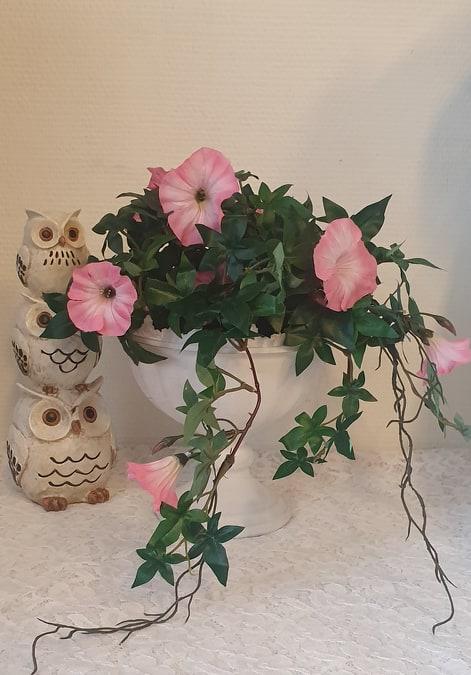 Blomma För Dagen - Rosa