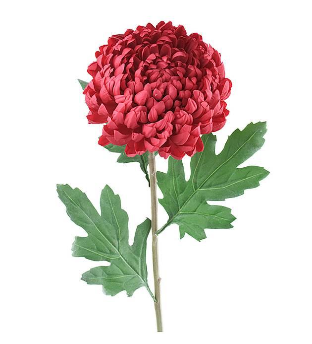 Chrysanthemum 75 cm