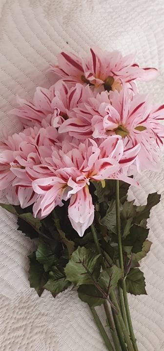 Dahlia Rosa - 45 cm
