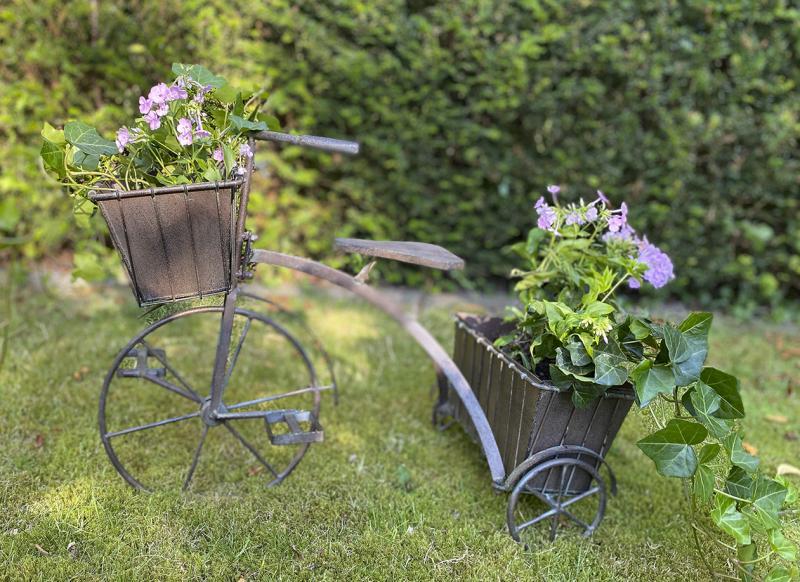 Cykel Till Växter