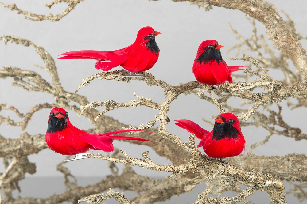 Fågel Cardinal På Clip