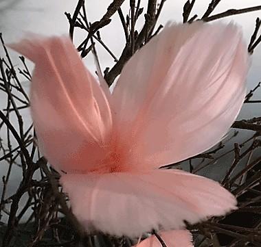 Fjäderblomma Ljusrosa 12-pack
