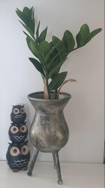 Garderobsblomma - Zamifolia - Grön - 45 cm