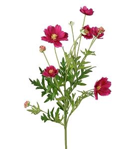 Coreopsis Rosa