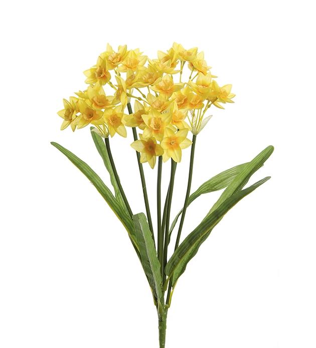 Gul Påsklilja / Narciss