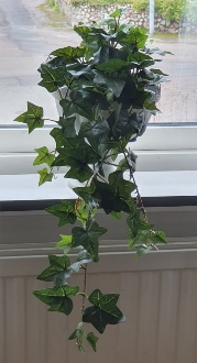 Hängande Murgröna 30 cm