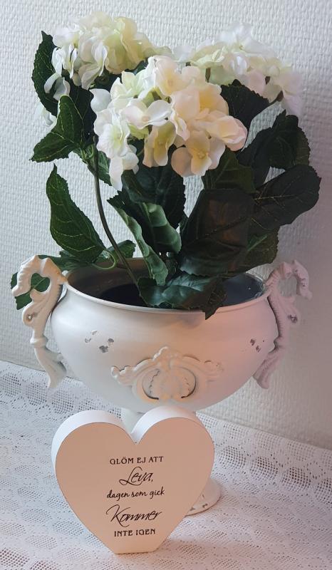 Hortensia Vit - 30cm
