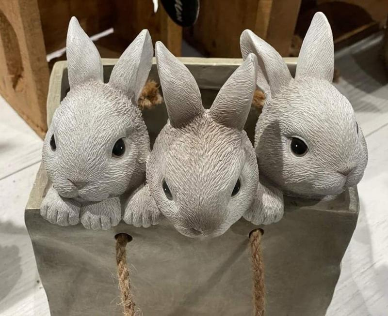 Kaniner I Kasse