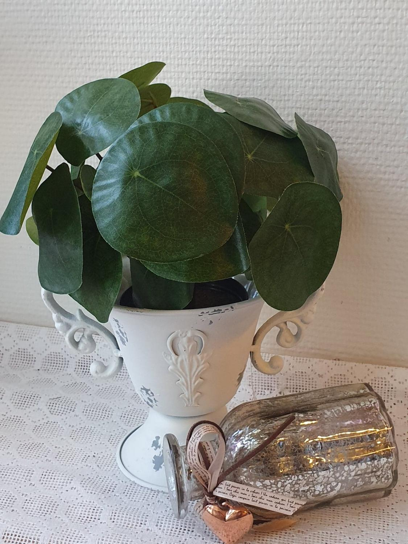 Konstväxt Elefefantöra 25 cm