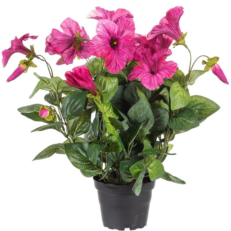 Petunia Cerise