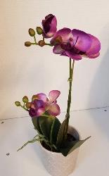 Phalaenopis - Orkidé Lila - Konstväxt